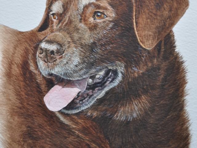 Cocoa Chocolate Labrador Watercolour Pet Portrait Bristol