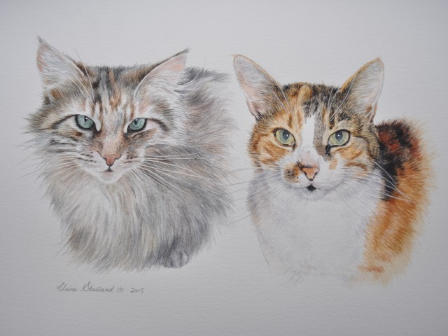 Molly and Jessica  Cat Watercolour Pet Portraits Gloucestershire