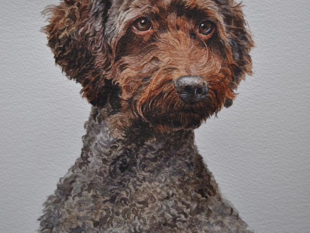 Missy Labradoodle Watercolour Pet Portrait London