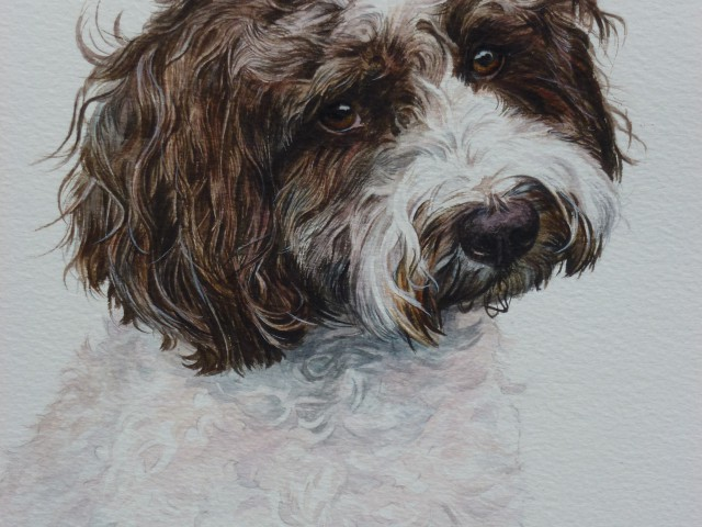 Cocoa Watercolour Portrait of a cockapoo