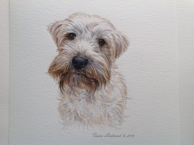Teddy a Lucas Terrier Watercolour Pet Portrait from Somerset
