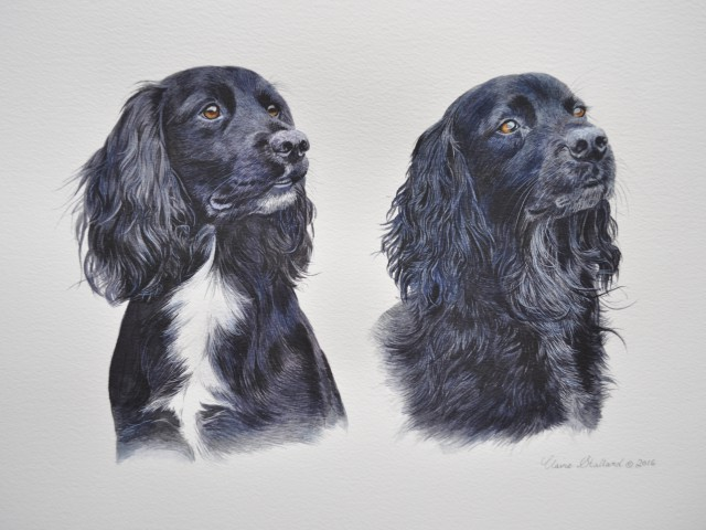 Taffy and Broch Spaniel Pet Portrait Glos