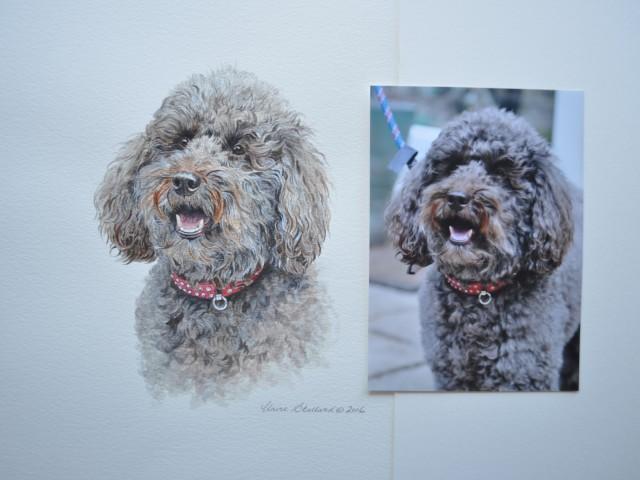 Poppy Poodle Pet Portrait Glos