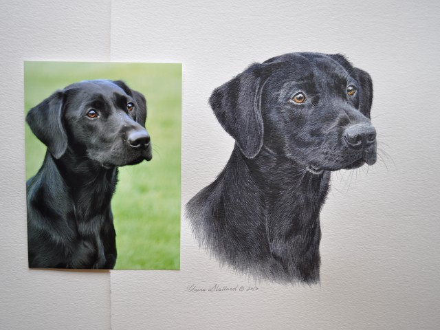 Cato   Black Labrador  Pet Portrait from London