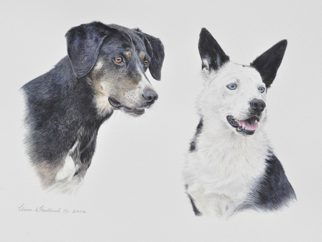Reina and Skye Pet Portrait Gloucestershire