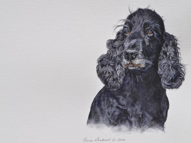 Beanie Cocker Spaniel Pet Portrait from Gloucestershire
