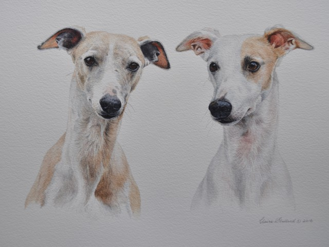 Sammy and Maisie  two  Whippets from Glos  Watercolour Pet Portrait