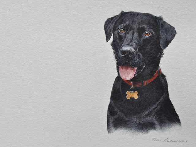 Black Labrador Water Colour Pet portrait London Alfie