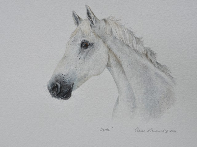 Berti  Watercolour Pet Portrait Horse