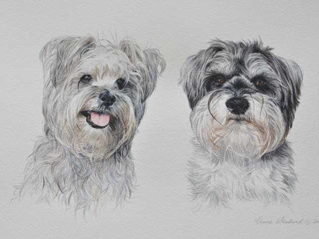 "Mini Schnauzer Pet Portrait ""Pip and Bertie"""