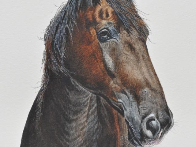 Horse Water Colour Pet Portrait
