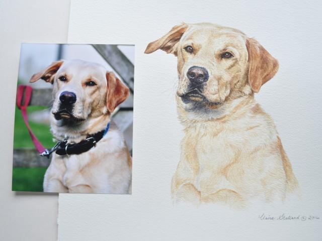 """Yellow Lab Water Colour Pet Portrait """"Rufus"""""""