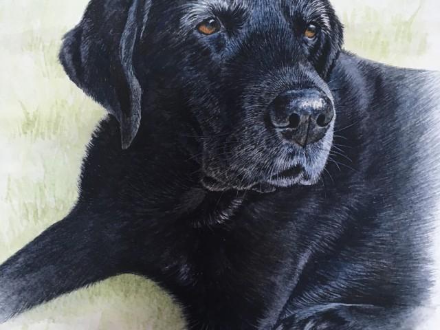"""""""Milly"""" Water Colour Pet Portrait Black Labrador"""
