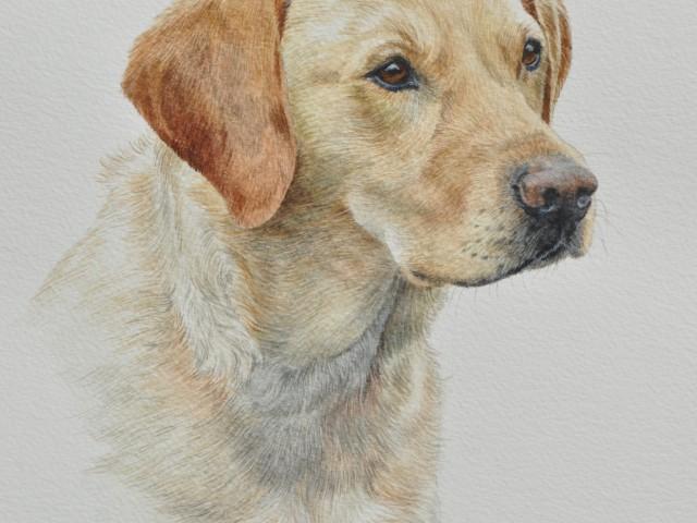 Millie, Labrador Water Colour Pet Portrait