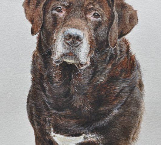 Labrador Water Colour Pet Portrait Somerset
