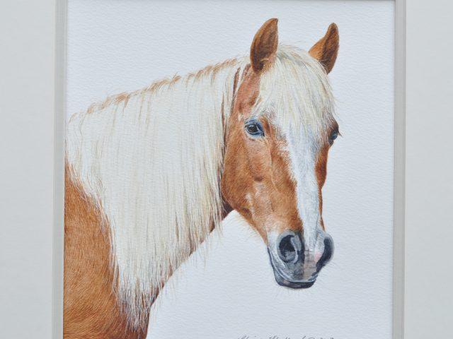 Bella Watercolour Horse Portrait Glos