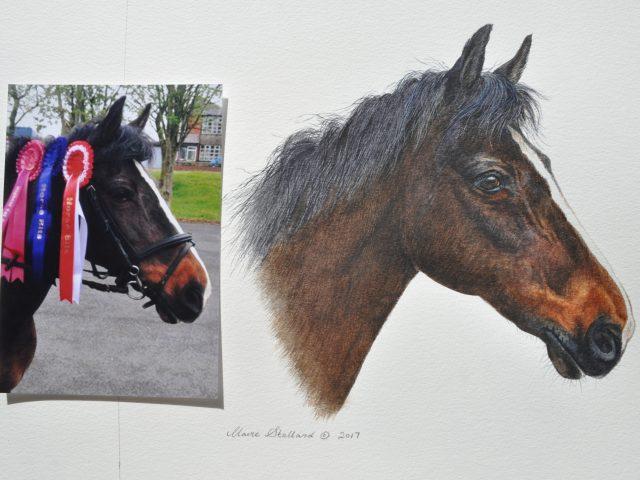 Ginny Horse Watercolour Portrait Lancs