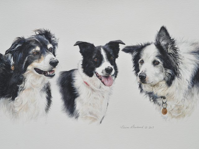 Pae, Tess and Skip Border Collies Gloucestershire