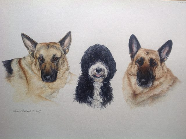 2 GSDs and a Cockapoo Water Colour Pet Portrait Wiltshire