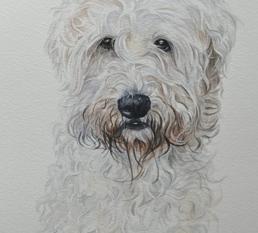 Cookie a Wheaten Terrier Pet Portrait from Glos