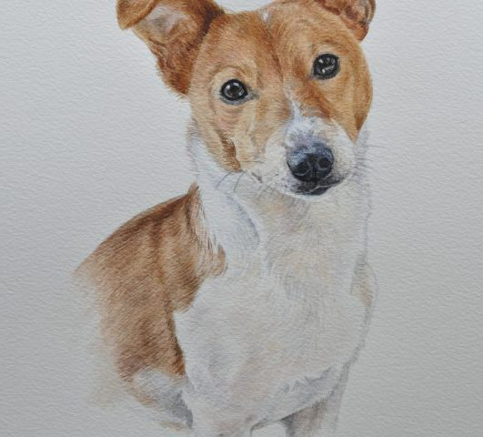 Freddie, Jack Russell Terrier Watercolour Pet Portrait Leics