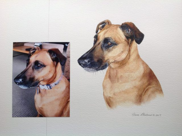 Freya, a New Zealand cross breed Pet Portrait