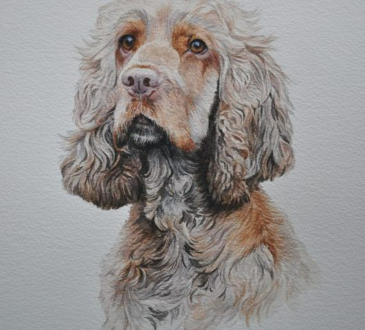 Honey, Cocker Spaniel Pet Portrait Glos