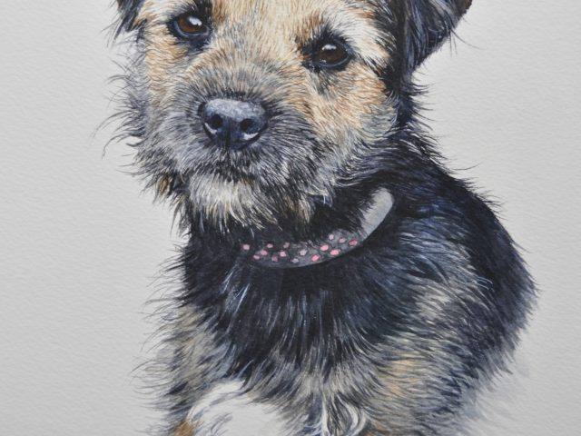 Ivy Border Terrier Watercolour Pet Portrait Wiltshire