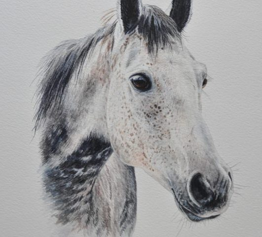 Merlin, Watercolour Portrait of a Horse