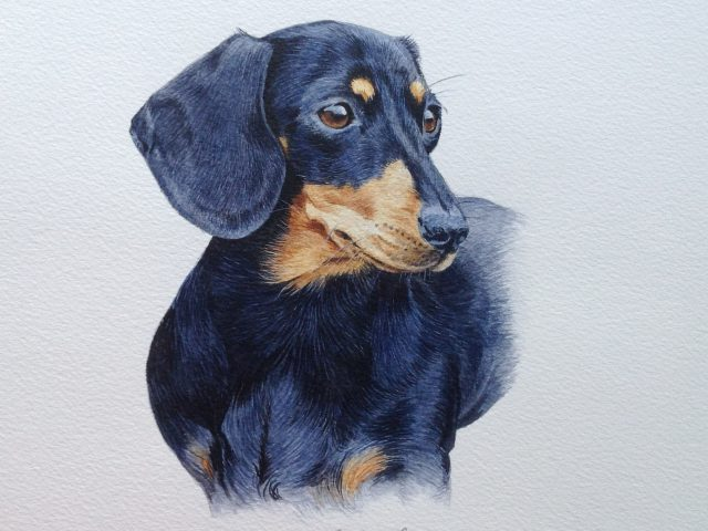 Rosie, Dachshund Watercolour Pet Portrait, Glos