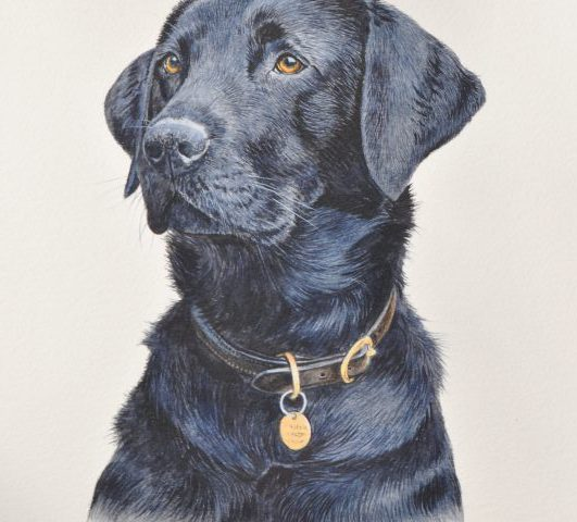 Tia Black Labrador  Pet Portrait Glos