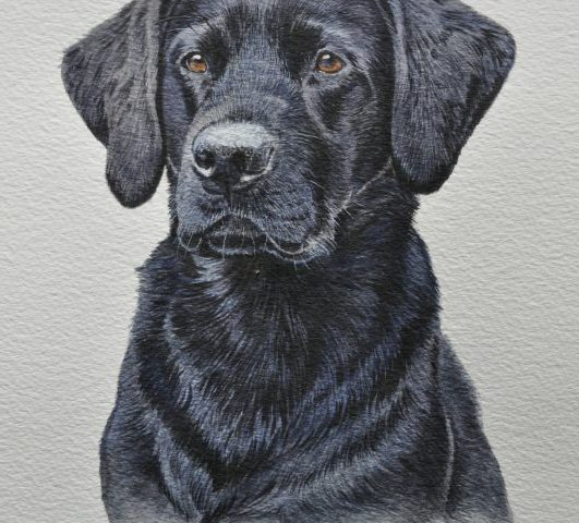 Winston Black Labrador Watercolour Pet Portrait Wiltshire