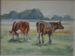 common-cows