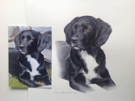 Commissioning a pet portrait | Dog
