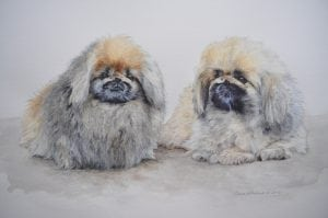 Two little dogs portrait