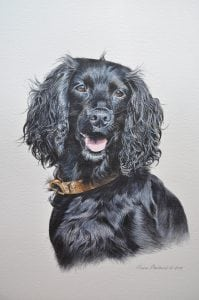 Curly dog portrait