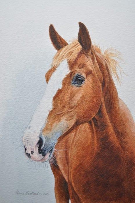 Claire Stallard - horse portrait