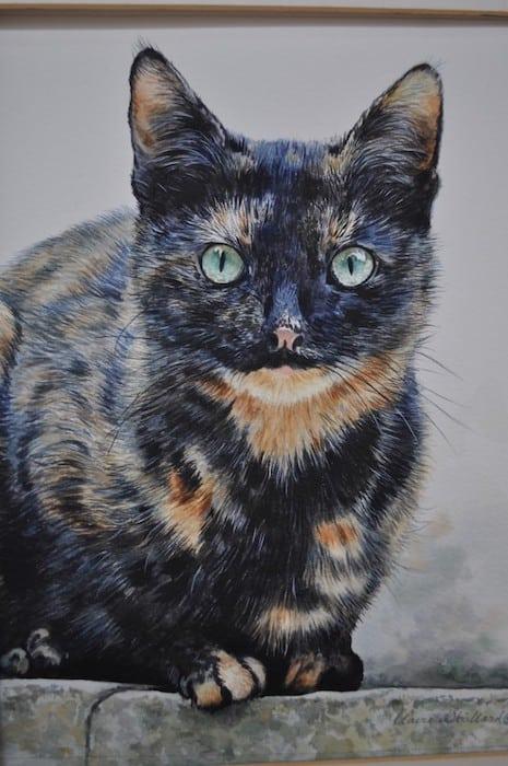 Claire Stallard - cat portrait