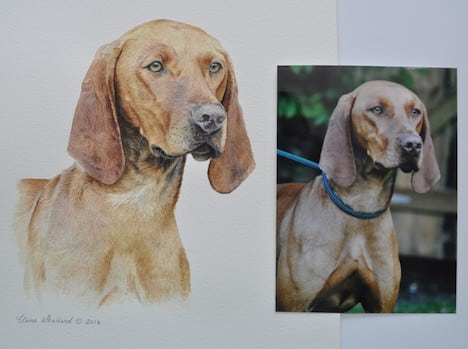 Commissioning a pet portrait | Dog portrait