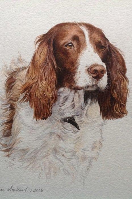 Claire Stallard - dog portrait