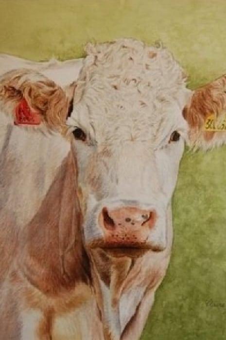 Claire Stallard - cow portrait