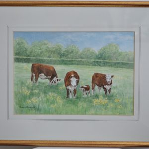 Cows and Buttercups